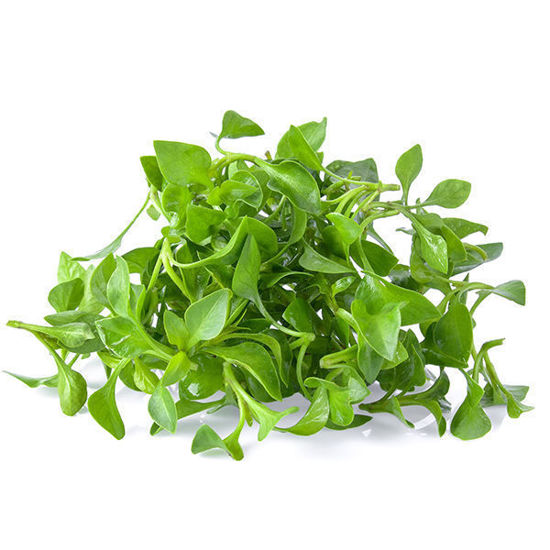 Watercress - Packet
