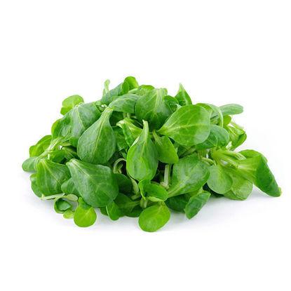 Lettuce - Mache (P) - Each