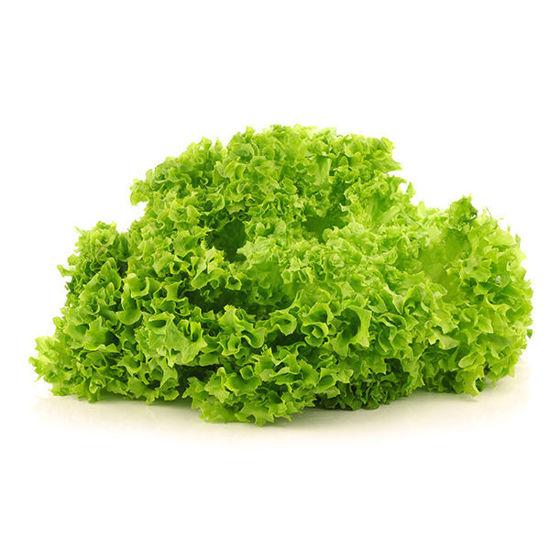 Lollo Bionda Lettuce - 12 Pack