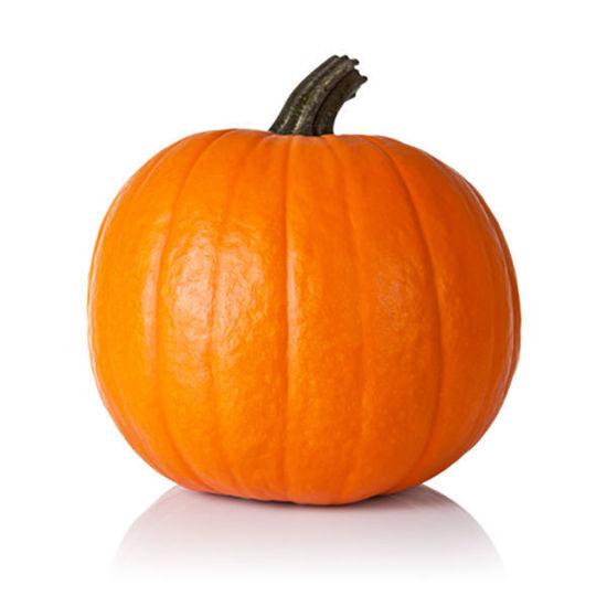 Pumpkin (FR) XL - Each
